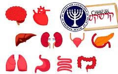 Orgaandonatie: een religieuze of een ethische kwestie?